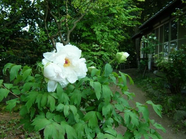 f:id:ytokoji:20100428152231j:image