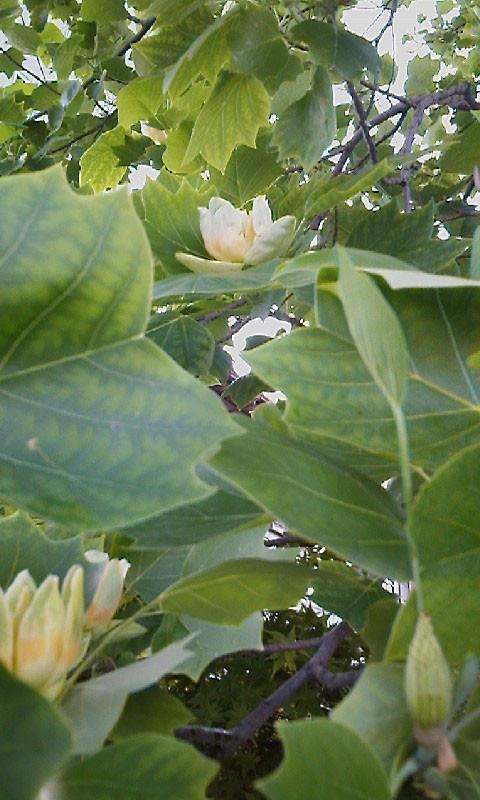 f:id:ytokoji:20100518082443j:image